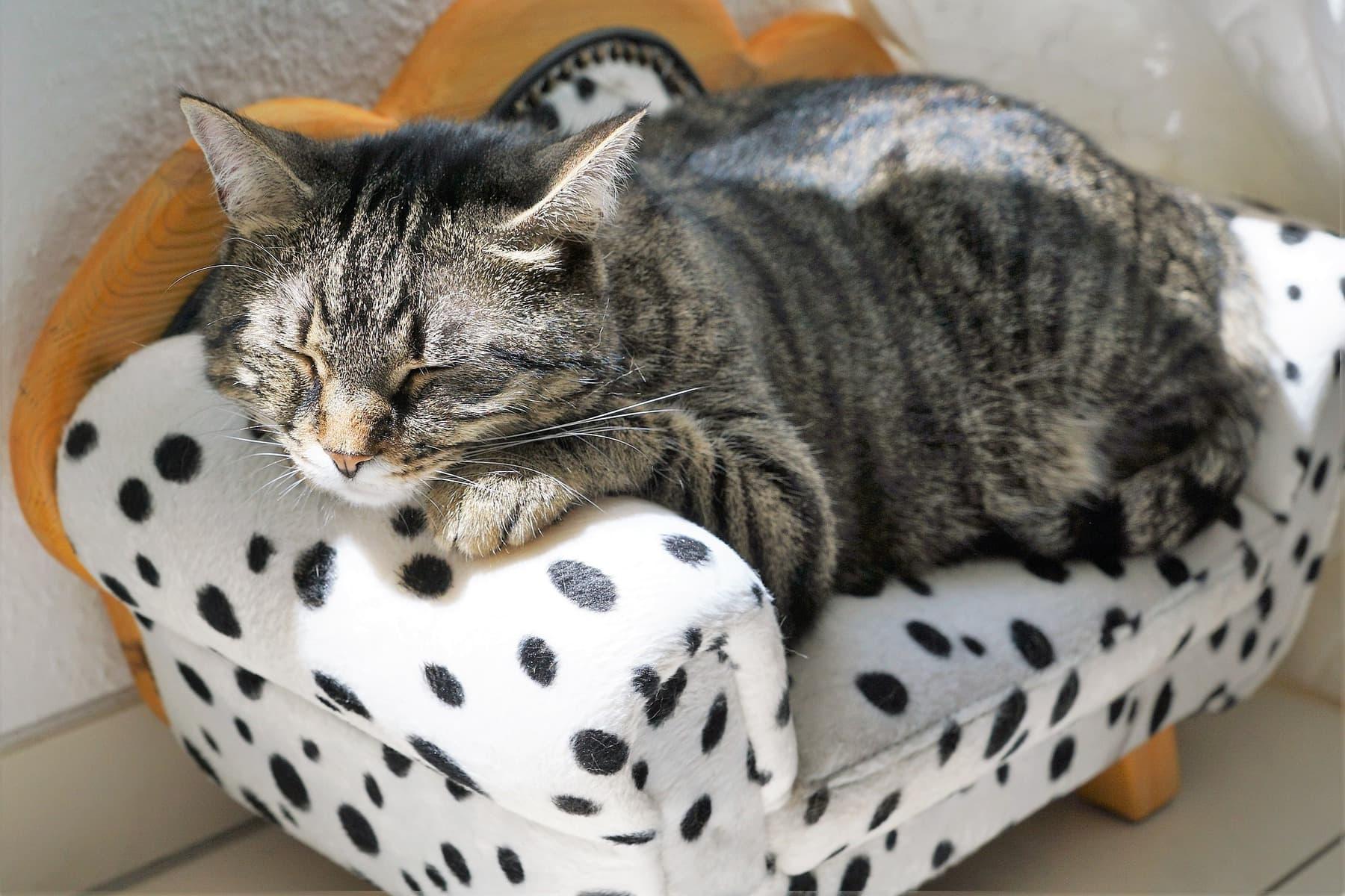 cat asleep on chair